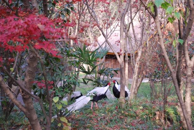 Spread A Little Love, Shanghai Zoo